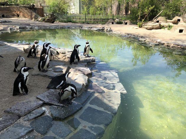 zoo-Magdeburg