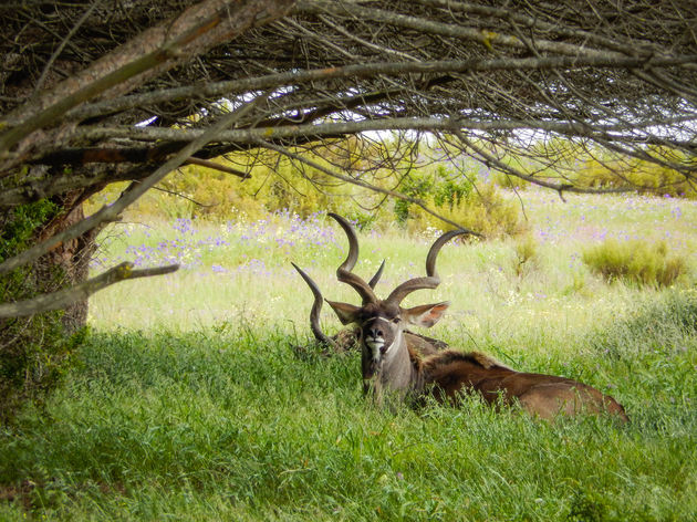 zuid-afrika-wetskust-wildlife