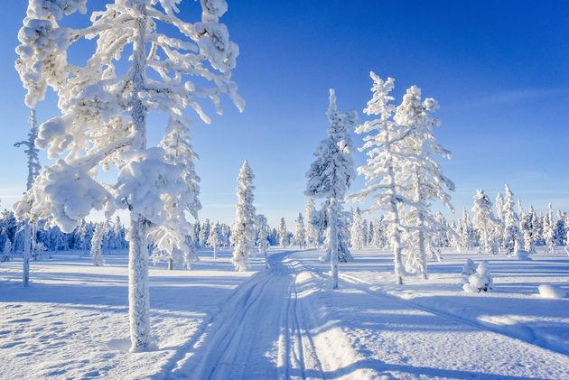 zweeds-lapland-bomen