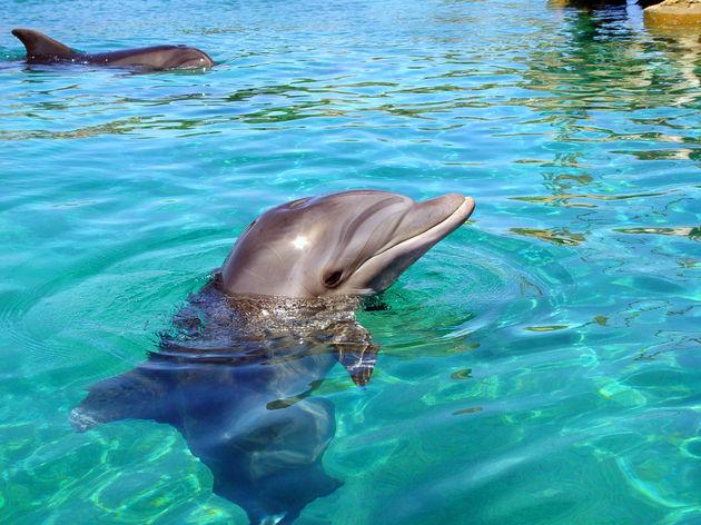 Zwemmen met dolfijnen