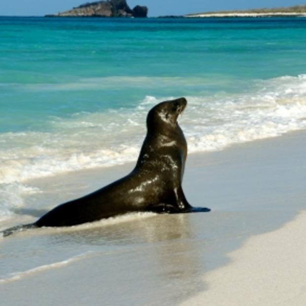 Binnen een druk op de knop op de Galapagos eilanden met Google Maps