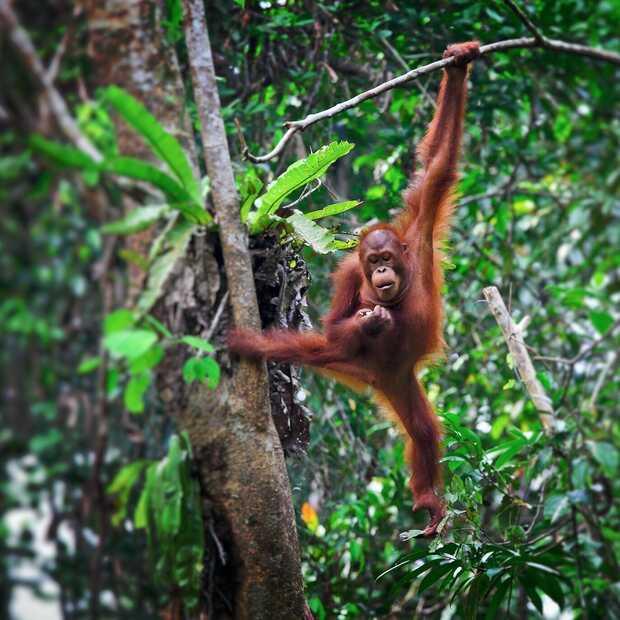 De docu 'A Life on Our Planet' is het kijken meer dan waard