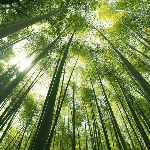 Drie redenen waarom bamboe ondergoed perfect is voor op reis