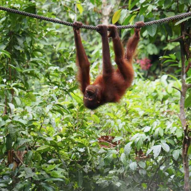 De 5 coolste dingen om te doen op Borneo