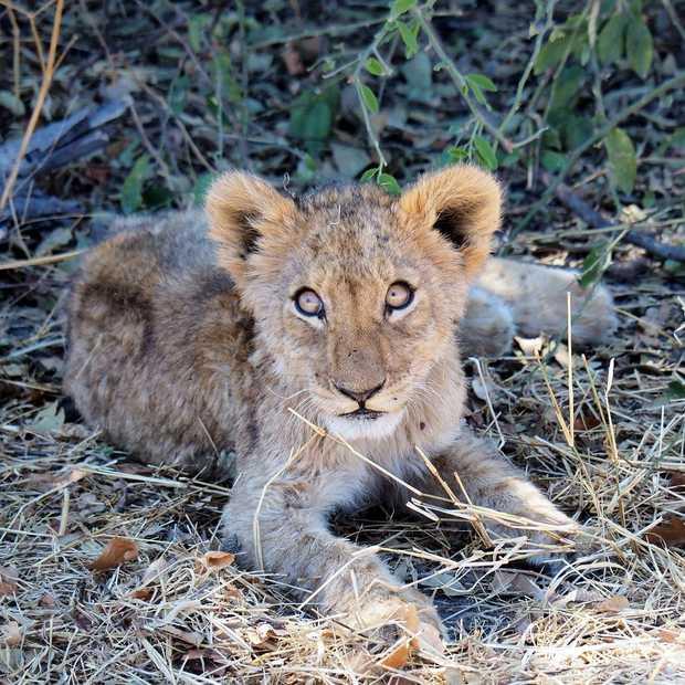 30 foto's die bewijzen dat Botswana dé safari-bestemming is