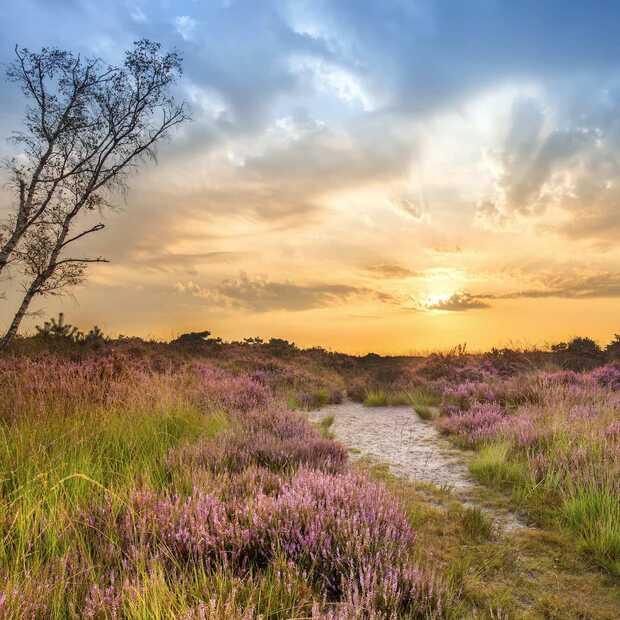 Dit zijn de 7 mooiste natuurgebieden in Noord-Brabant