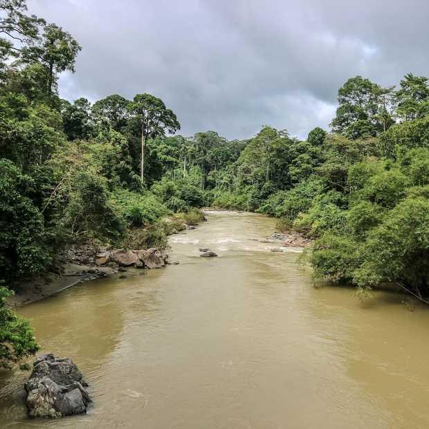 Danum Valley op Borneo is de droom van iedere jungle liefhebber
