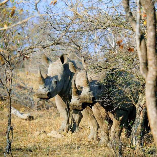 9 dieren die je ooit een keer in het wild moet hebben gezien