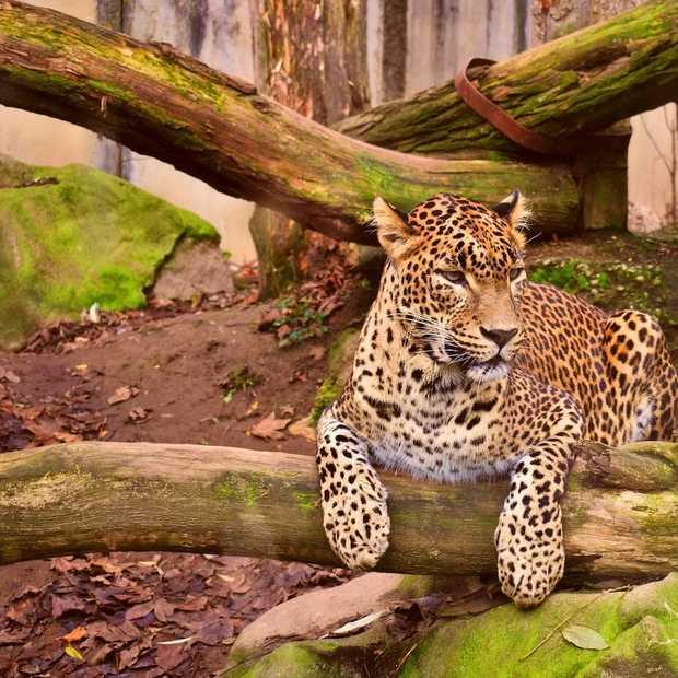 Dit weekend naar de dierentuin? Het kan, maar dan wel online