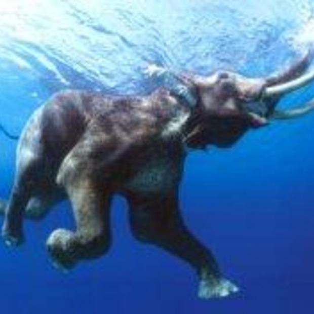 Duiken met olifanten