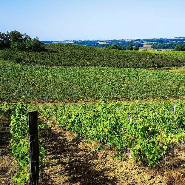 5 redenen voor een wijnreis naar de Gascogne