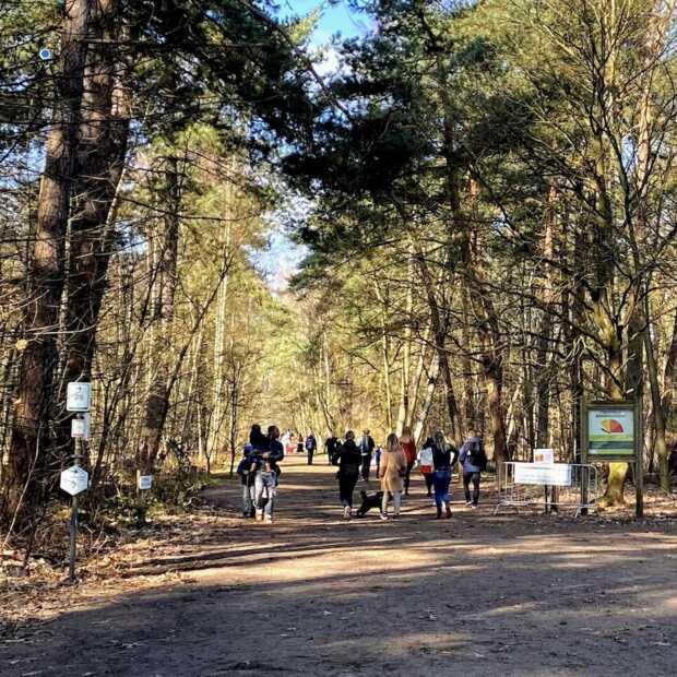 Zo mooi is de Kalmthoutse Heide: wandelen in Brabant doe je hier