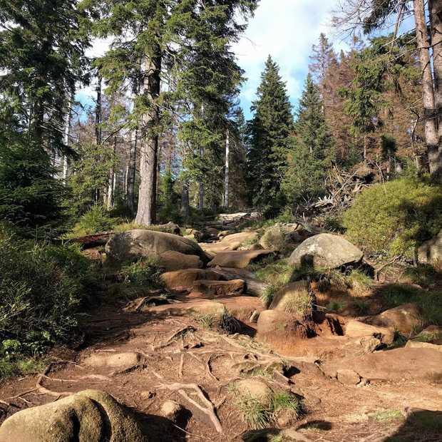 'Harz' van de berg op een monsterroller