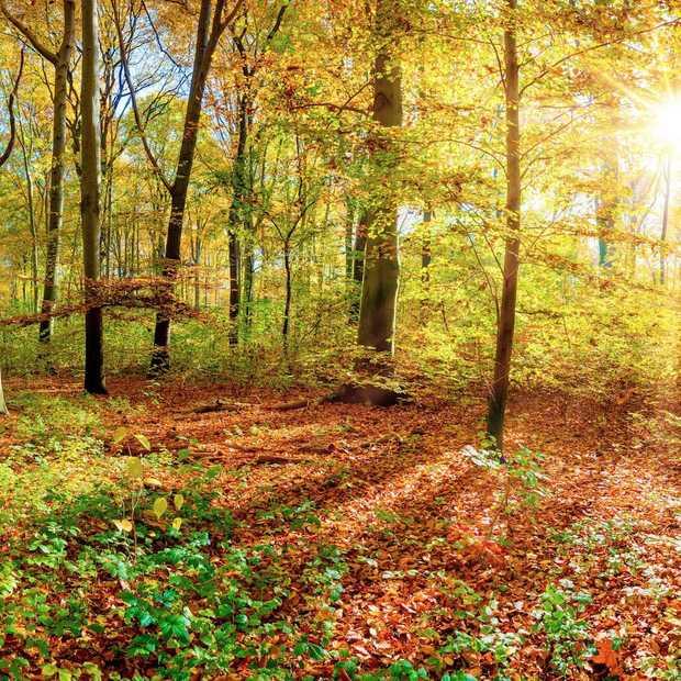 Vier leuke tips om te doen in de herfst