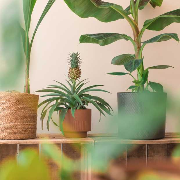 Zo geef je je huis een tropisch tintje