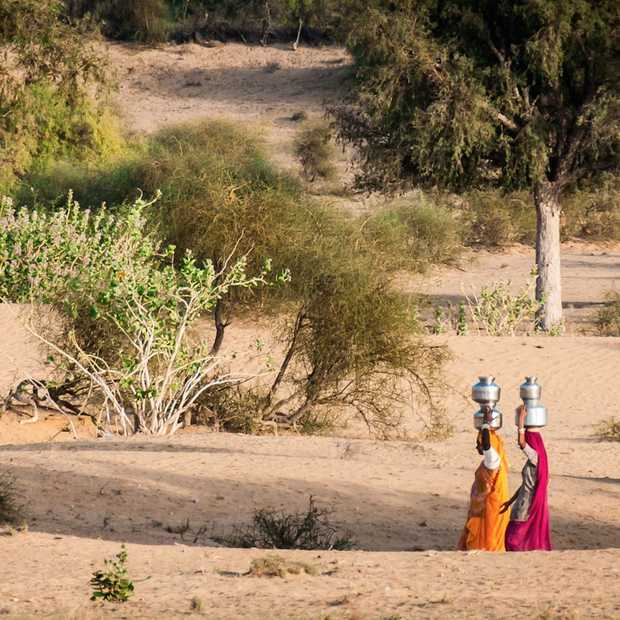India plant 50 miljoen bomen op één dag!