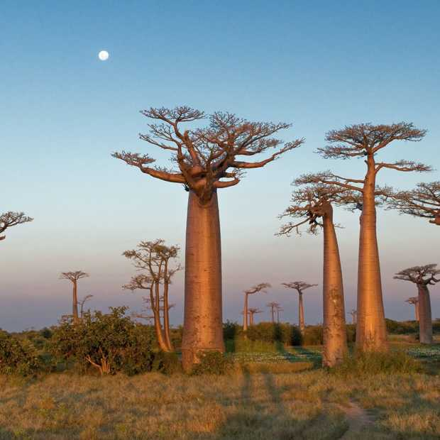 Madagaskar is het best bewaarde geheim ter wereld
