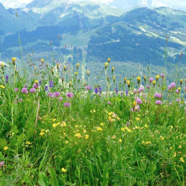 De magie van de Franse bergen