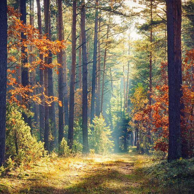 Dit zijn de 7 mooiste boswandelingen in Nederland