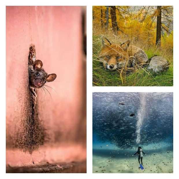 De 20 mooiste natuurfoto's van National Geographic van 2015