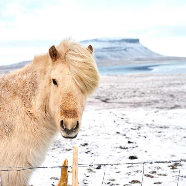 Het natuurschoon van IJsland in 30 foto's
