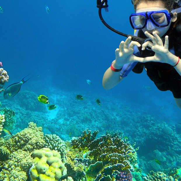 PADI duikbevret halen in het buitenland: zo werkt het