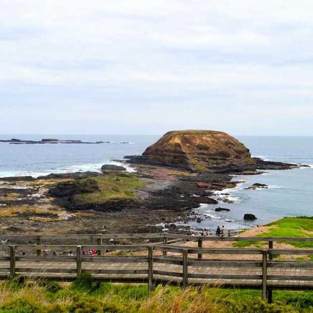 Strand, rotsen en Australische dieren op Phillip Island