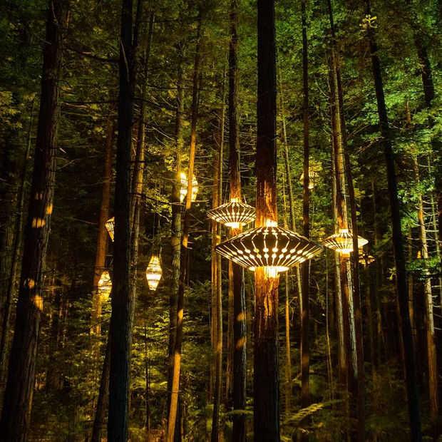 Doen in Nieuw-Zeeland: tree walk door prachtig verlicht bos