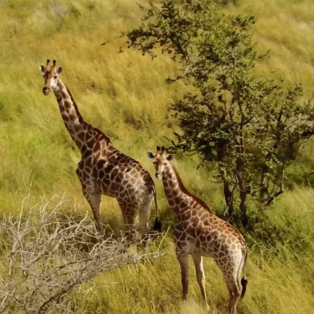 Droombeelden van een sensationele safari in Zuid-Afrika