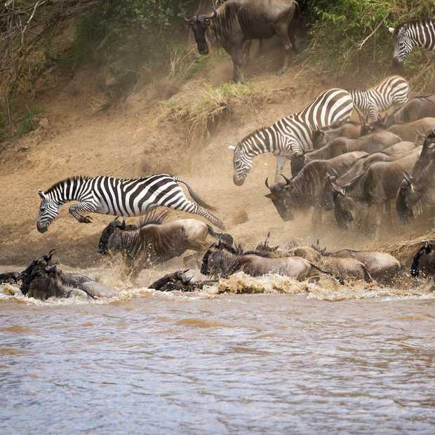 De Grote Trek in de Serengeti: vanuit de lucht nóg spectaculairder