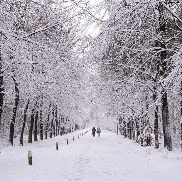 Geniet mee van de mooiste foto's van sneeuw in Nederland!