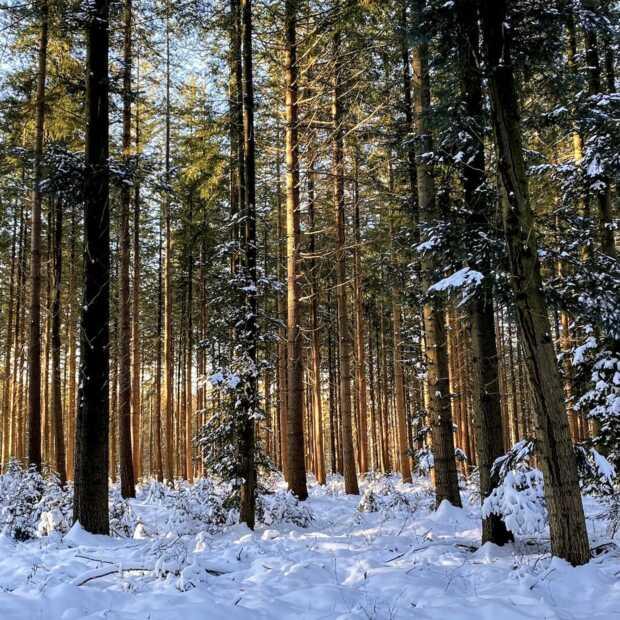 Wandelen tussen de dansende bomen in een magisch Speulderbos