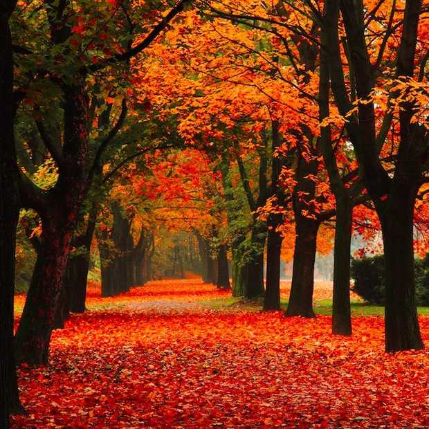 10 dingen die je weer kunt doen omdat het herfst is