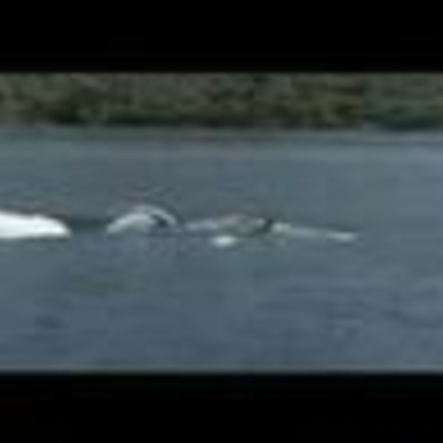 Video: Seabreacher X