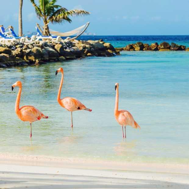 Na het zien van deze video wil je NU naar de Caraïben