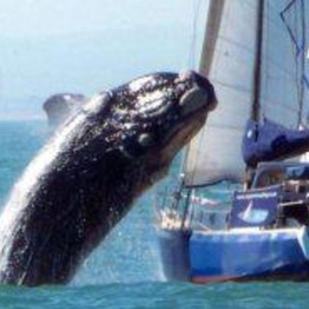 Walvisspotten niet zonder gevaar!