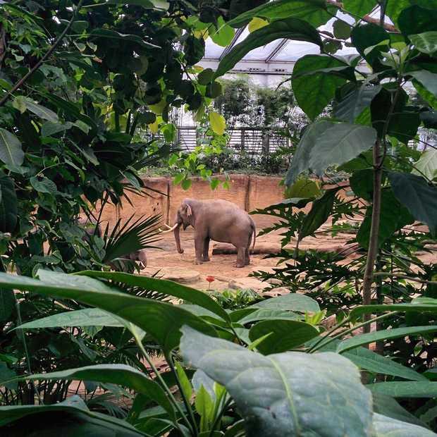 Wildlands Adventure Zoo Emmen brengt dieren weer dichterbij