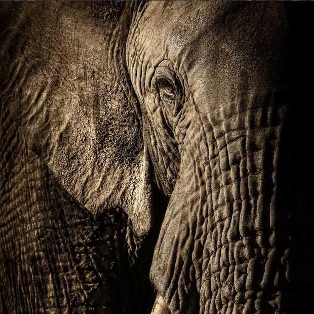 Deze 13 foto's van dieren in het wild zijn overweldigend mooi