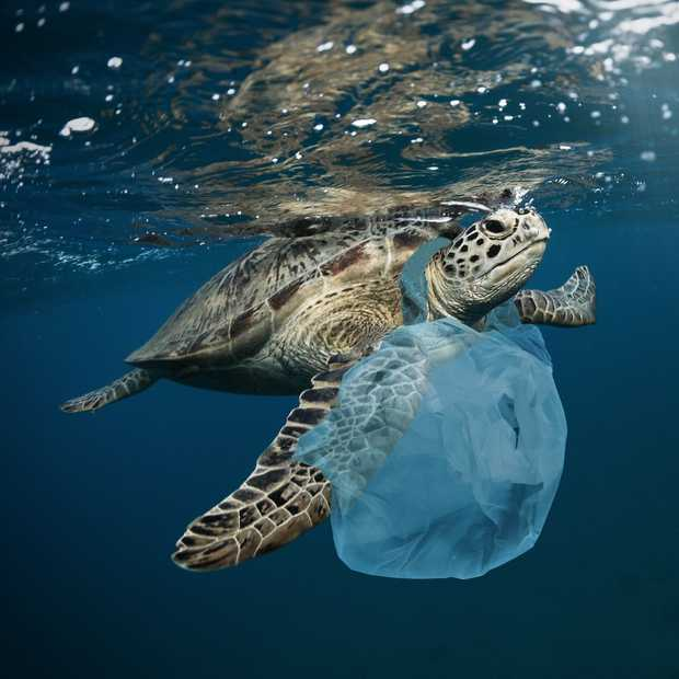 World Cleanup Day 2019: doe jij mee?