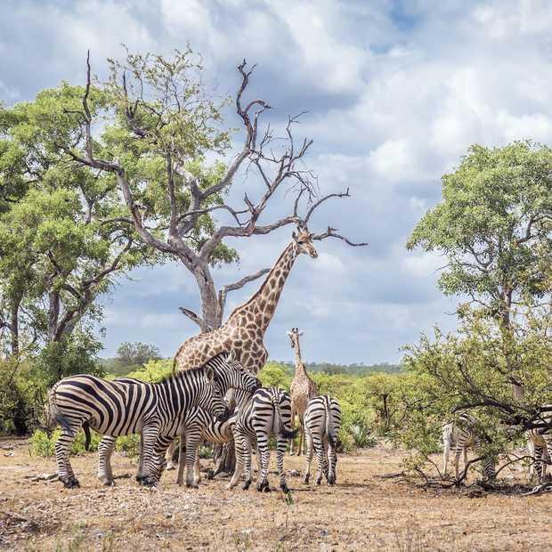De 5 mooiste, minder toeristische bezienswaardigheden van Zuid-Afrika