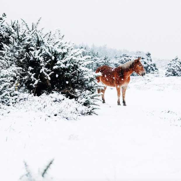 3 minuten genieten van winter in Abisko in Zweeds Lapland