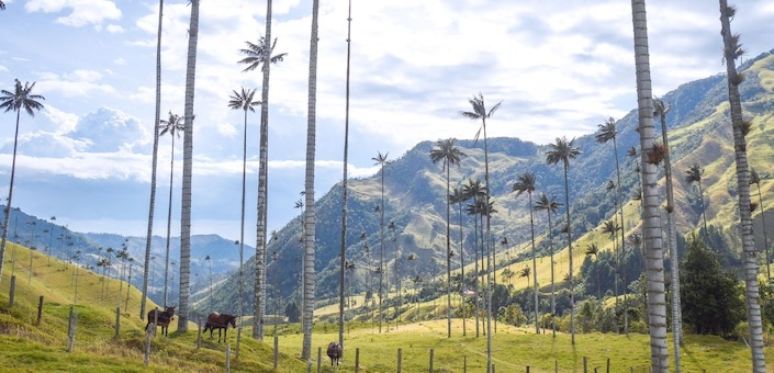 Dit wil je doen in Salento, Colombia!